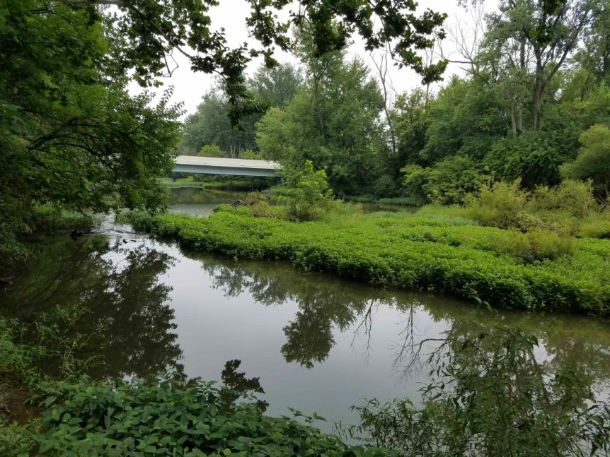 Paddle environment 2
